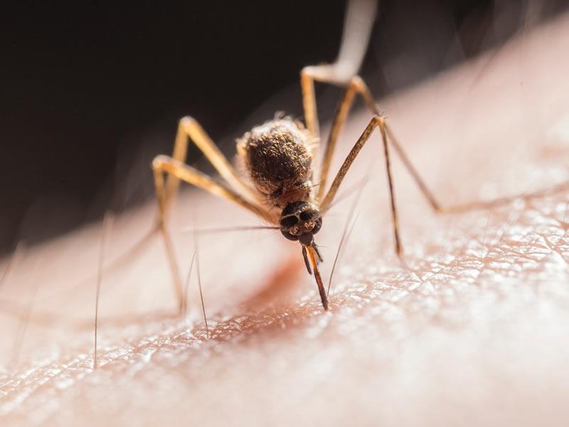 Kako ravnati ob piku žuželk